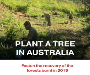 Plant a tree in Australia with your Peer Review Credits